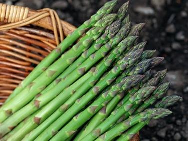 asparagus-photorack