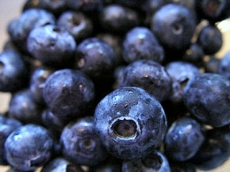 blueberry-freezer-jam-recipe