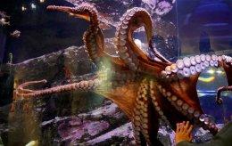 02182017_octopus_1709332-1020x644