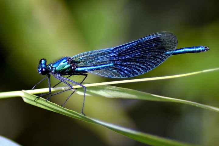 animal biology blue blur